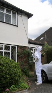 treating a wasps nest in bromley